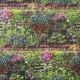 """Papier peint METAPHORE effet """" mur végétal """" par Caselio"""